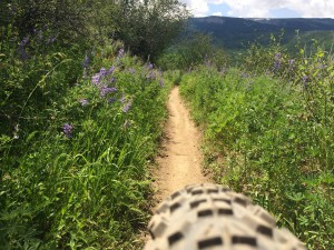 view of the trail up close on bike